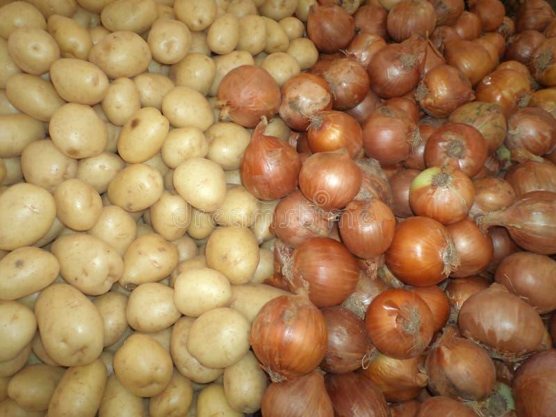 Średni zrywanie cebule i anglik grule zdjęcia stock