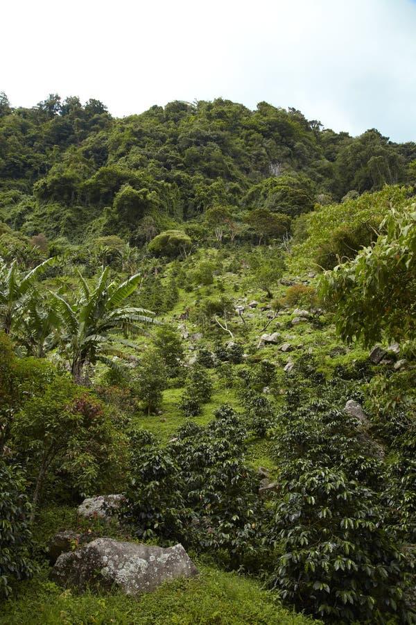 Średniogórza, Boquete, Chiriqui, Panama4 zdjęcie stock