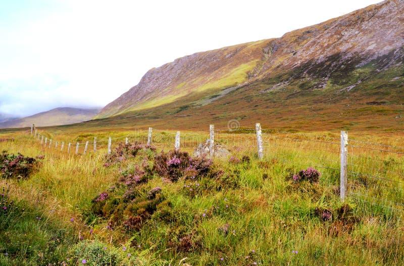 średniogórza szkockich obraz royalty free