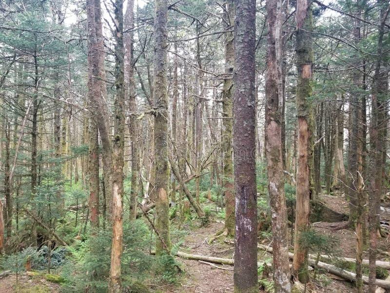 Średniogórza w Virgina wysokich drzewach zdjęcie stock