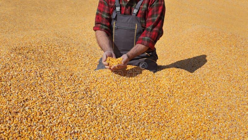 Średniorolna i kukurydzana uprawa zdjęcia stock