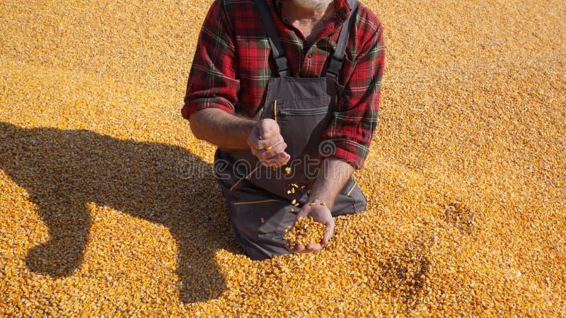 Średniorolna i kukurydzana uprawa obrazy stock