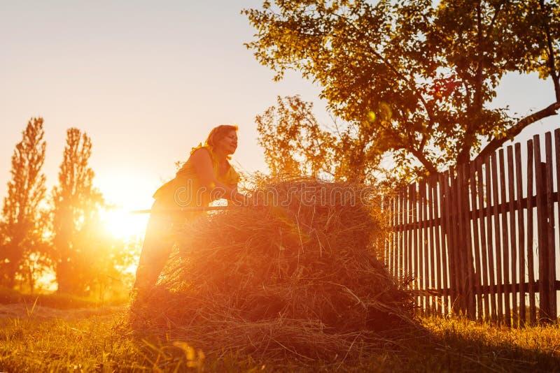 Średniorolna kobieta zbiera siano z pitchfork przy zmierzchem w wsi Ciężka praca w wiosce obrazy royalty free