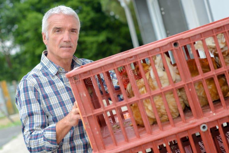 Średniorolnego mienia plastikowa skrzynka zawiera kurczaki zdjęcie royalty free