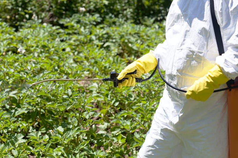 Średniorolnego opryskiwania toksyczni pestycydy lub flit w jarzynowym ogródzie obraz stock