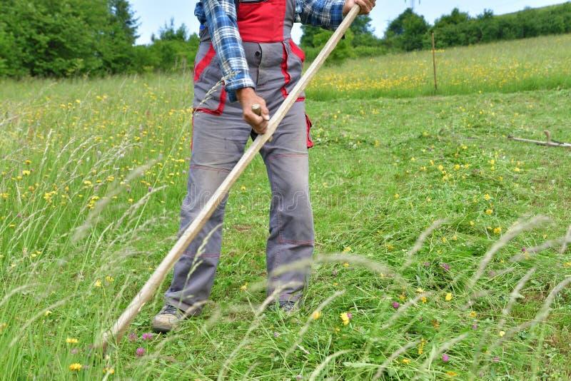 Średniorolnej kośby trawy tradycyjny sposób z ręki kosą zdjęcia royalty free