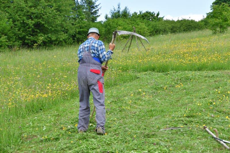 Średniorolnej kośby trawy tradycyjny sposób z ręki kosą obraz stock