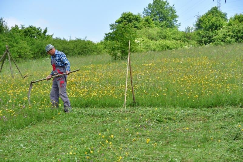 Średniorolnej kośby trawy tradycyjny sposób z ręki kosą obrazy royalty free