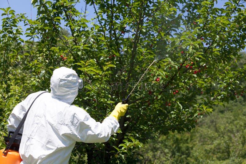 Średniorolni opryskiwanie pestycydy, herbicydy lub obrazy stock