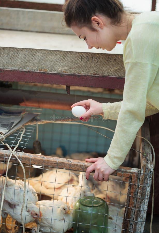 Średniorolny kobiety mienia kurczaka jajko w henhouse obrazy royalty free
