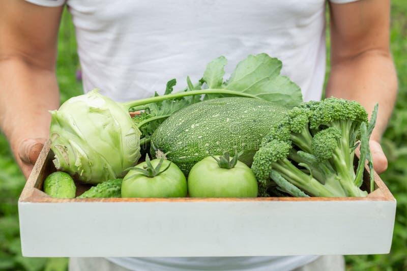 Średniorolny mienia pudełko z zielonymi organicznie warzywami zdjęcia royalty free