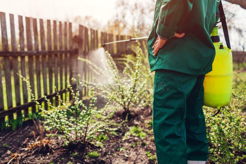 Średniorolny opryskiwania drzewo z ręczną pestycyd natryskownicą przeciw insektom w wiosna ogródzie rolnictwa ?r?dpolnego ogrodni obrazy stock