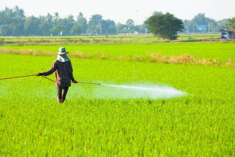 Średniorolny opryskiwanie pestycyd fotografia stock