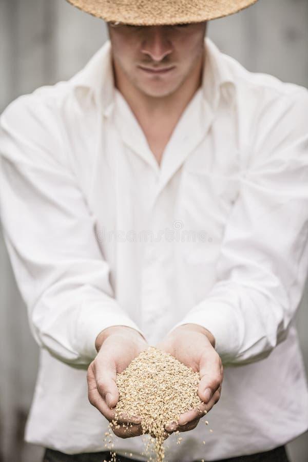 Średniorolny Pokazuje zwierzę Suchy jedzenie zdjęcie stock
