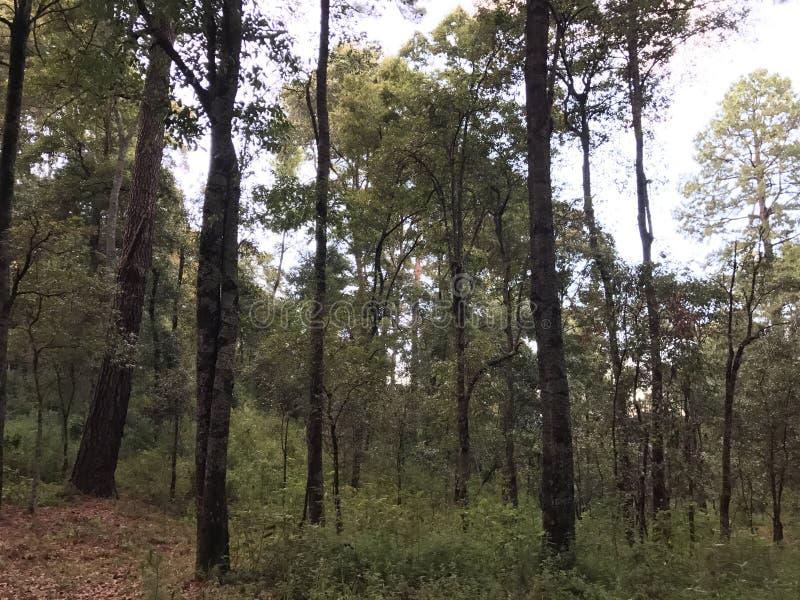 Środek las drzewa, pełno fotografia royalty free