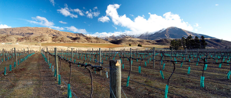środkowa otago wytwórnia win zima zdjęcia royalty free