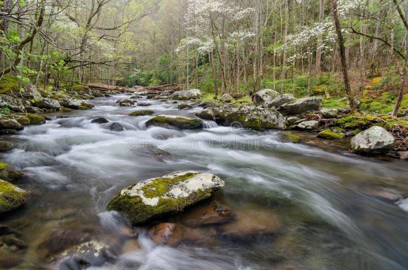 Środkowa Prong wiosna, Great Smoky Mountains fotografia royalty free