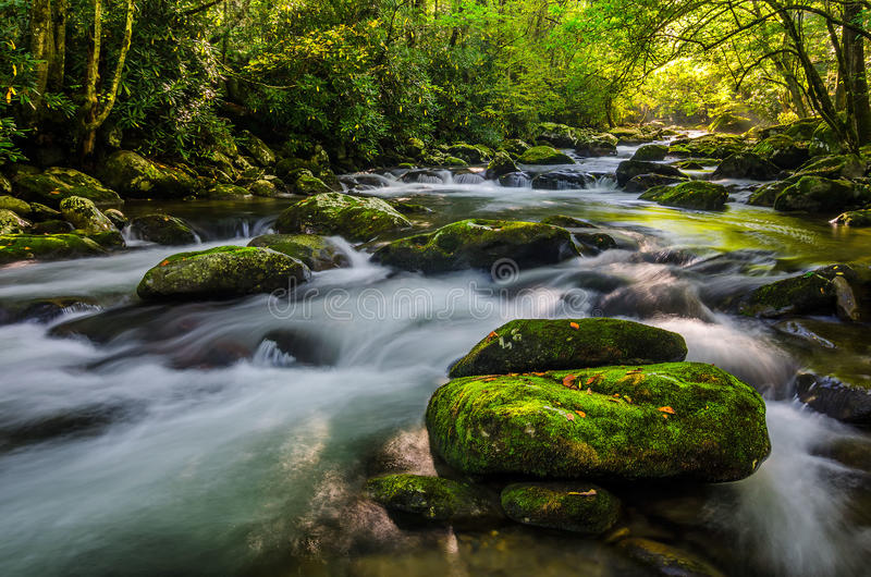 Środkowy Prong, Great Smoky Mountains fotografia stock