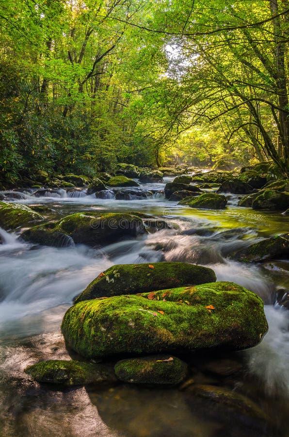 Środkowy Prong Mała rzeka, Great Smoky Mountains zdjęcie stock