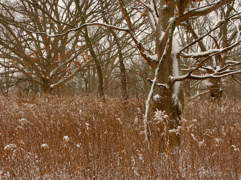 Środkowy Zachód zimy lasu scena obrazy royalty free