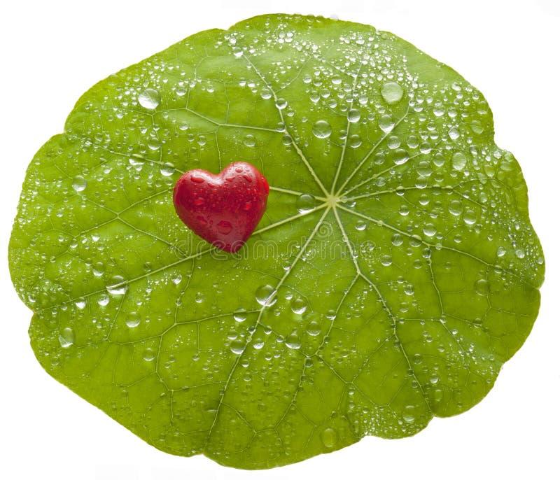 Środowisko miłości liścia serce zdjęcia stock