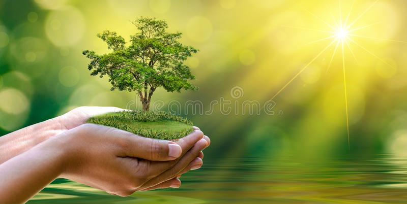 Środowisko Ziemski dzień W rękach drzewa r rozsady Bokeh zielenieje tło ręki mienia Żeńskiego drzewa na natury pola grą obraz royalty free