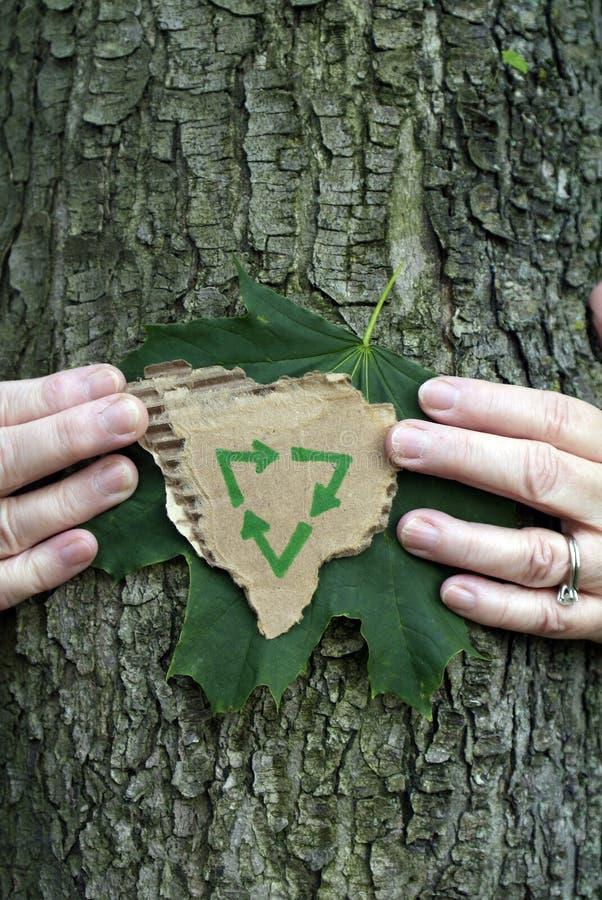 środowiskowy konserwaci drzewo zdjęcie stock