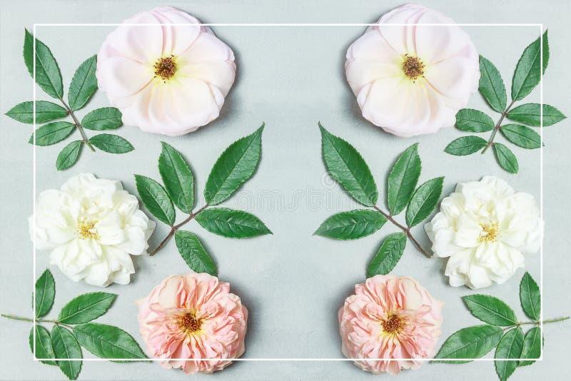 Świąteczny kwiatu skład na szarym tle Odgórny widok overhead zdjęcia royalty free