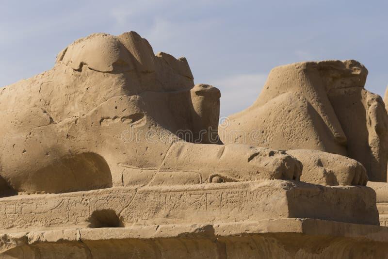 Świątynia Karnak Luxor, Egipt Afryka, pustynia zdjęcia stock