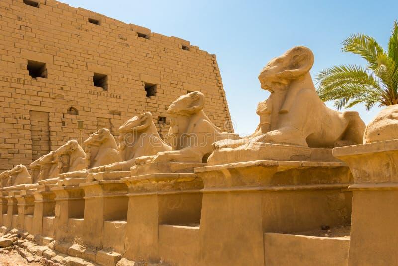 Świątynia ponowny i kózki przewodziliśmy sfinksy - Criosphinxes, Karnak, Egipt zdjęcie royalty free