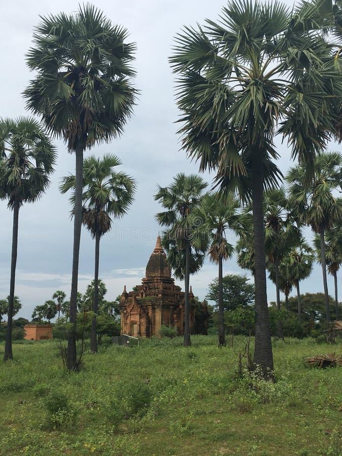 Świątynia wśród drzewka palmowego fotografia stock