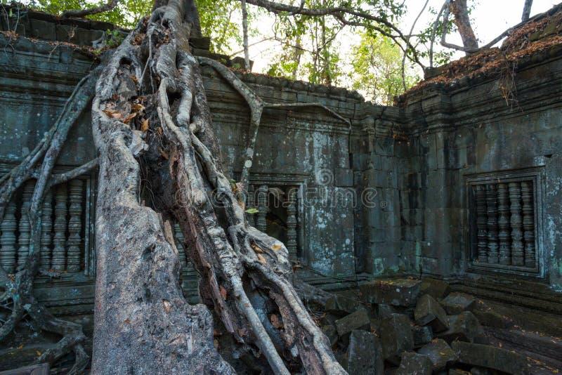 Świątynny Beng Mealea, Angkor Wat, Kambodża obraz royalty free