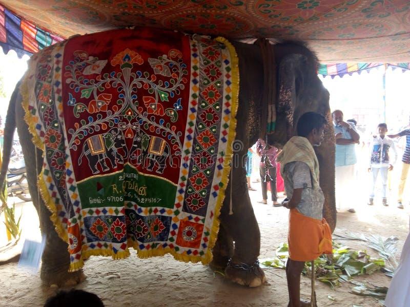 Świątynny słoń obraz royalty free