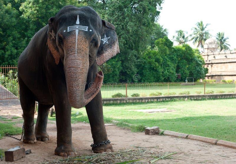 Świątynny słoń obrazy stock