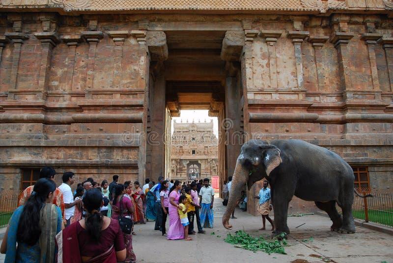 Świątynny słoń w India obrazy royalty free