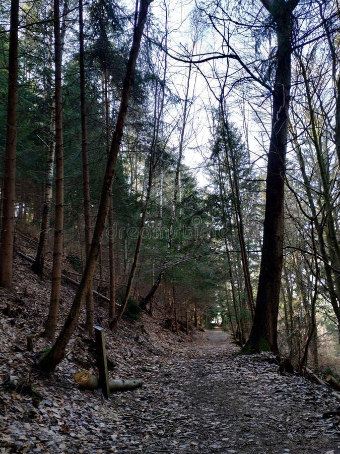 Święta ścieżka przez sosnowego lasu zdjęcie royalty free