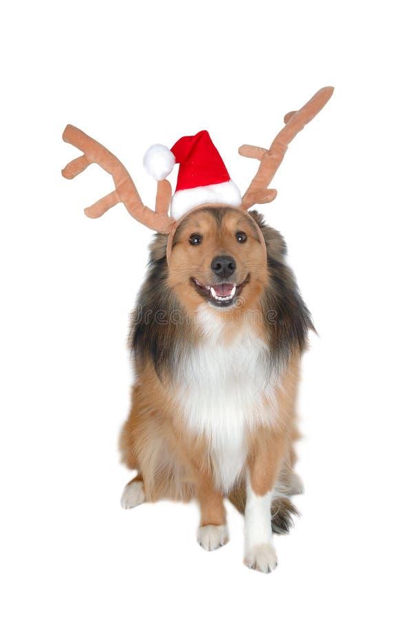 Święta 3 jelenia pies zdjęcia royalty free