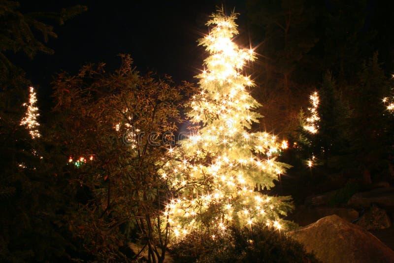 Święta drzew pełne światło fotografia stock