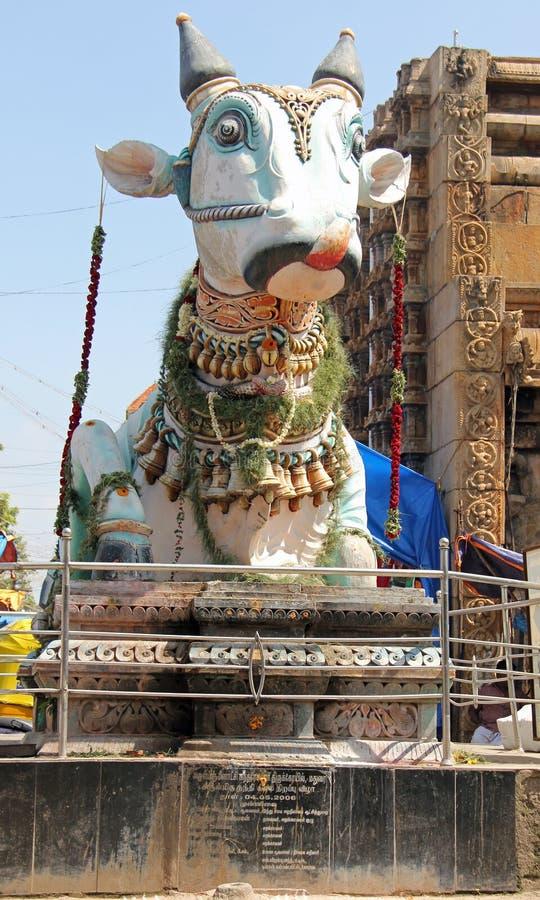 Święta krowa blisko Sri Meenakshi Amman świątyni zdjęcia stock