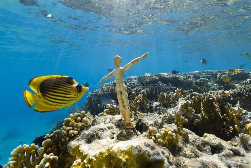 Świętuje morze zdjęcia stock