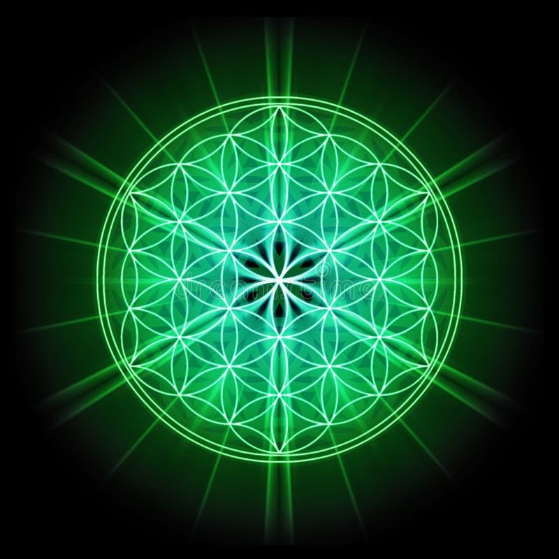 Święty geometria kwiatu życie na czarnym tle royalty ilustracja
