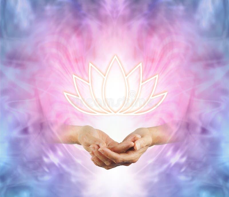 Święty Lotus obrazy royalty free