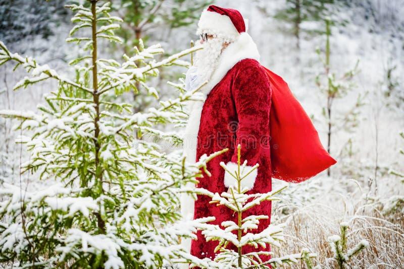 Święty Mikołaj z prezent torby odprowadzeniem przez lasu obrazy royalty free