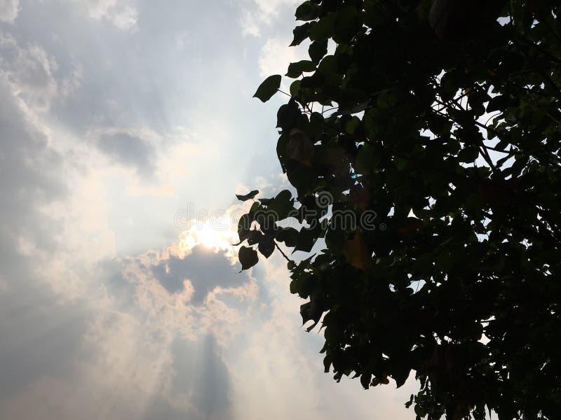 Światła słonecznego darkh cień zdjęcie royalty free