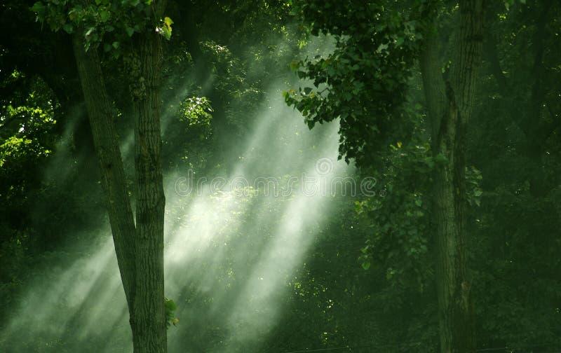 Download światła się lać lasu zdjęcie stock. Obraz złożonej z kolory - 139612