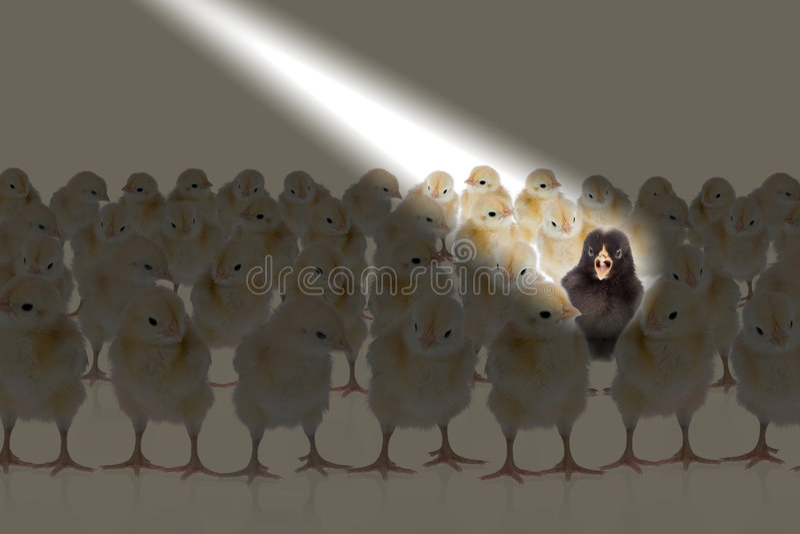 Światło kurczaka zdjęcie stock