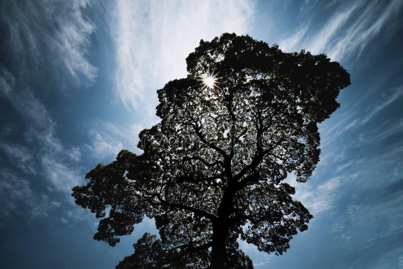 ?wiat?o s?oneczne b?yszczy przez du?ych drzew w mie?cie zdjęcie royalty free