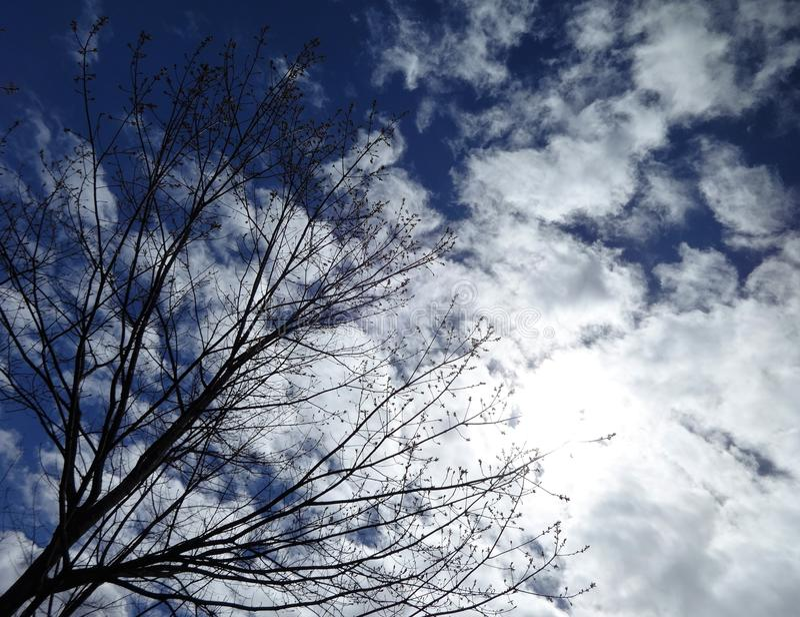 Światło słoneczne, biel chmury i niebieskie niebo z gałąź, fotografia stock
