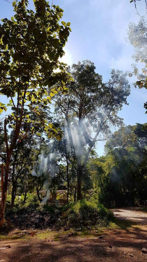 Światło słoneczne dzień obraz stock