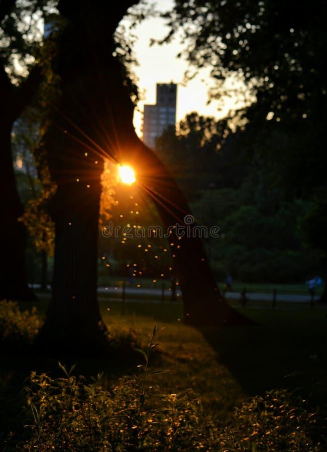 Światło słoneczne miłość zdjęcia royalty free